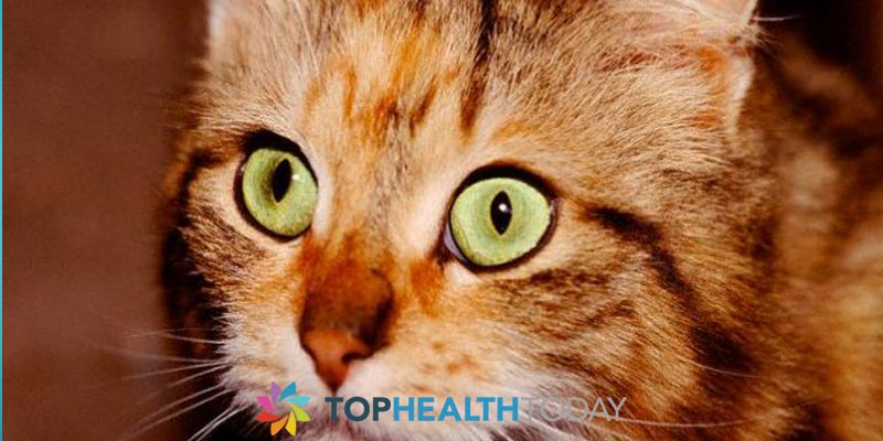 Can Cats get Tear Stains Around their Eyes?