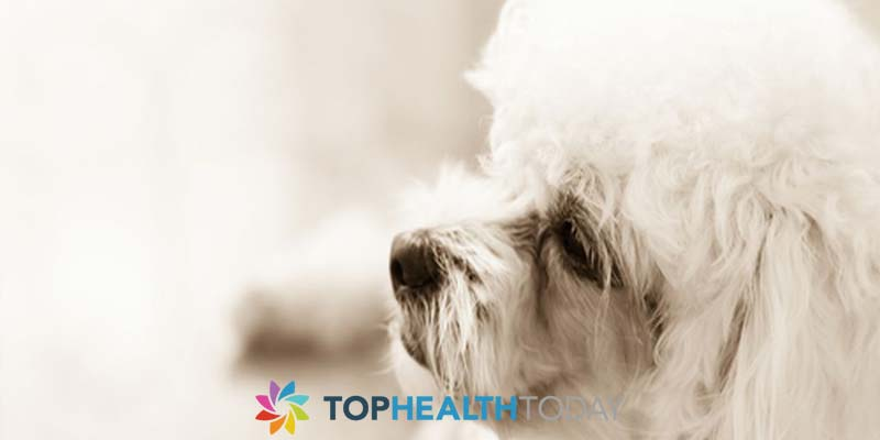 Fix tear stains on white dog