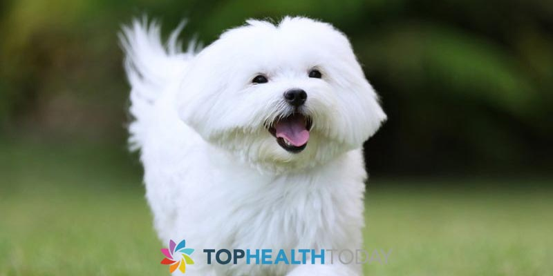 Why Should I Use A Tear Stain Supplement On My Dog