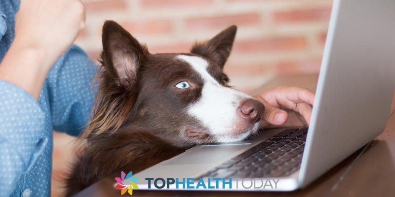 pet tear stains product online