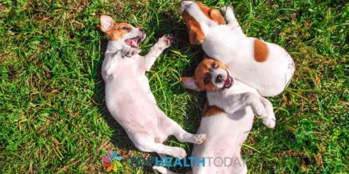 What are the Causes of Epiphora in Pets?